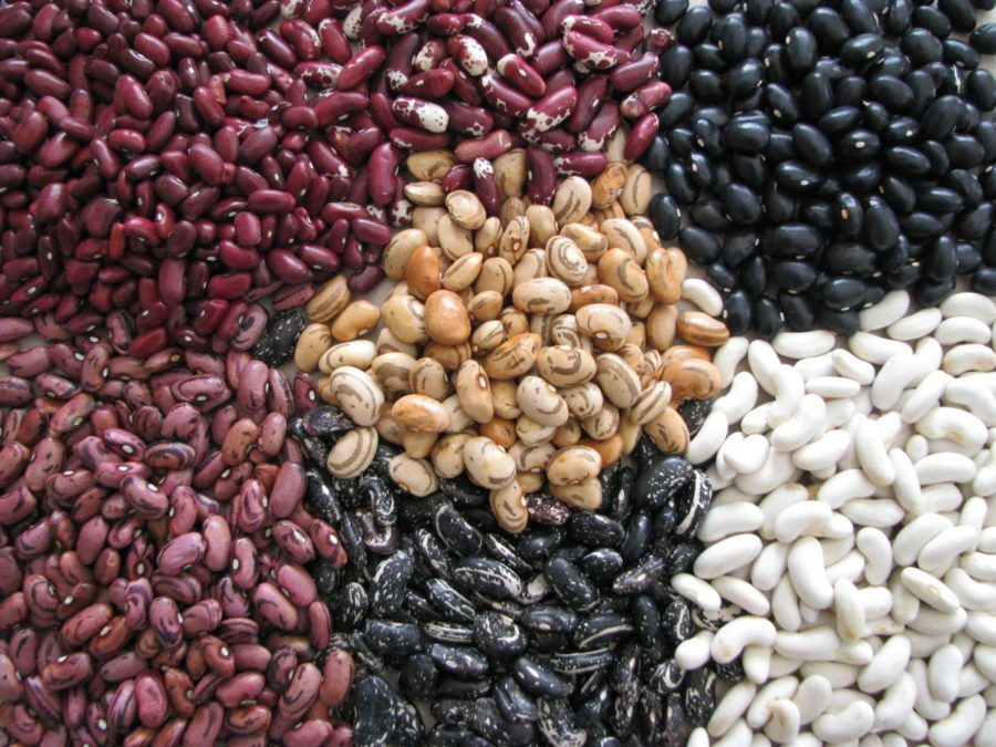 beans to gain weight